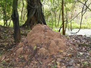 TermiteMound
