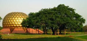 india_matrimandir_tree_big